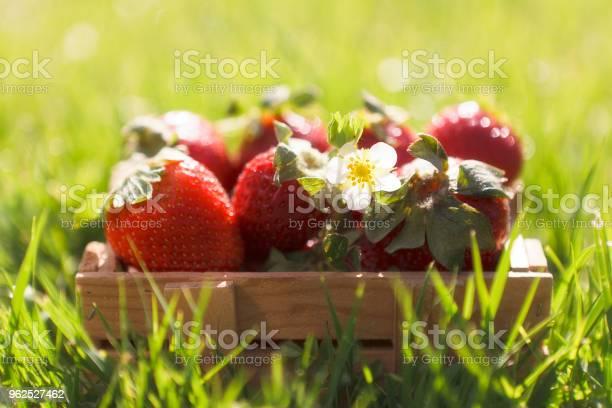 Foto de Closeup De Pequeno Balde Com Morangos Frescos E Suculentos Na Grama Verde Ao Ar Livre e mais fotos de stock de Agricultura