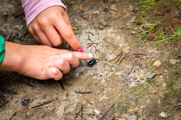 Closeup of little children boy and girl hands at forest ground, exploring and learning about nature and insects. Pointing and touching a black bug. stock photo