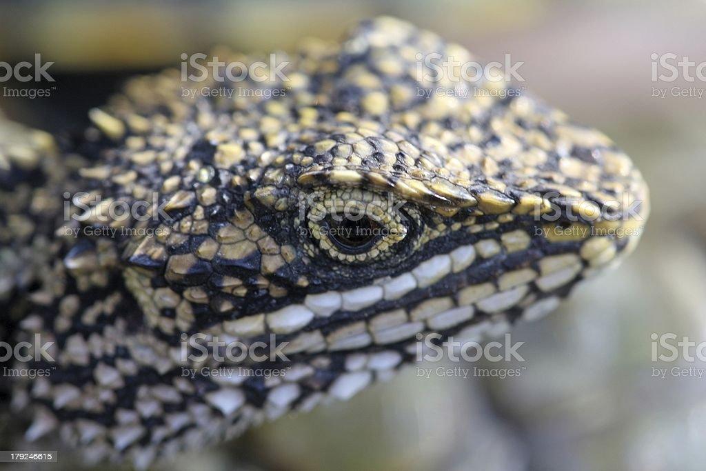 closeup of lizards royalty-free stock photo