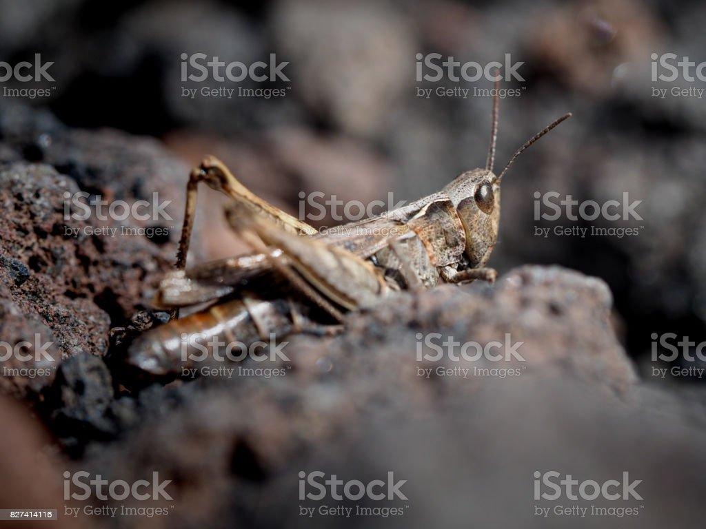 close-up of locust stock photo