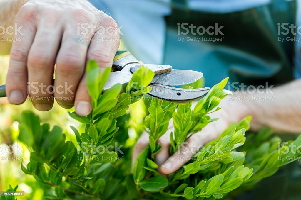 Close-up of man pruning plants in yard stock photo