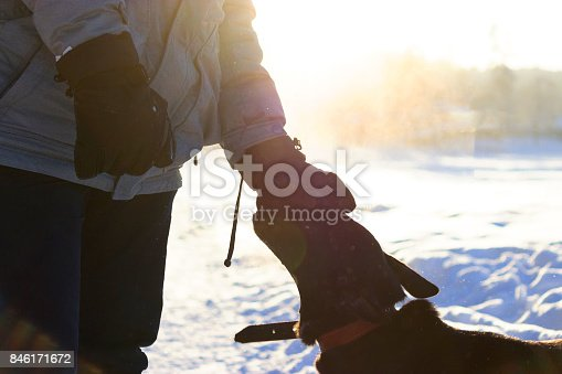 istock Close-up of mans hand papering dog at the beach 846171672