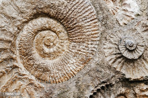 istock Closeup of many ammonite prehistoric fossil on the surface of the stone, Archeology and paleontology concept 1158882447