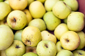 Closeup of many golden gold yellow delicious green apples in box at farmer's market shop store showing detail and texture in Virginia orchard farm