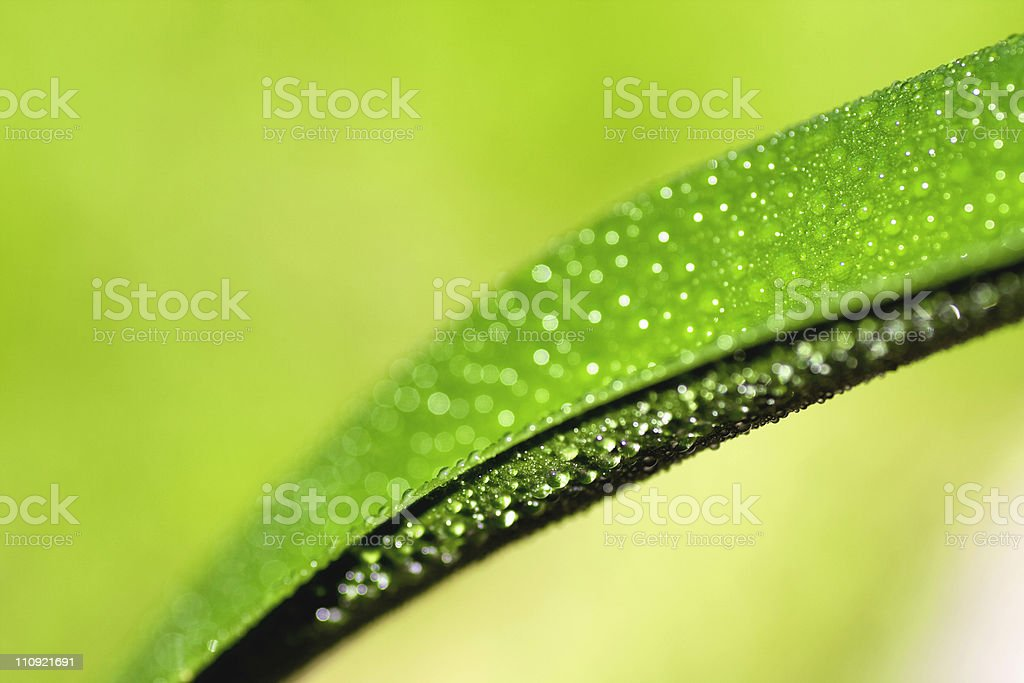 Close-up of Morning Dew on Green Leaf royalty-free stock photo