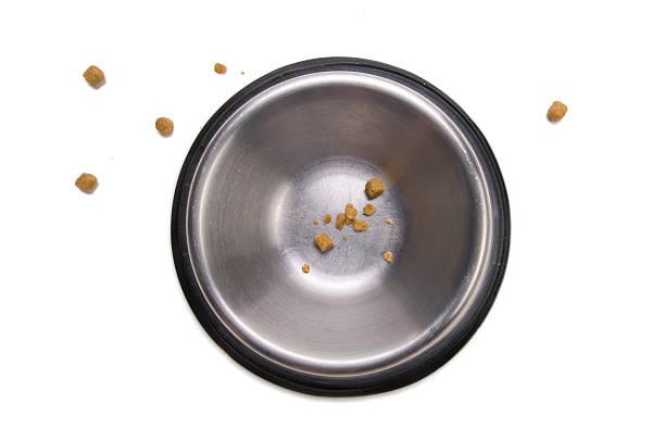 hund-bowl-serie - hundenapf stock-fotos und bilder