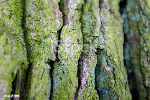 Closeup Of Oak Tree Bark