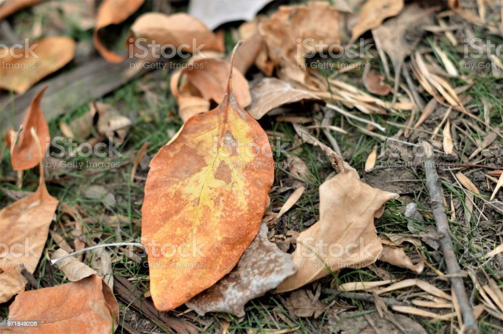 Close-up of old autumn leaf stock photo