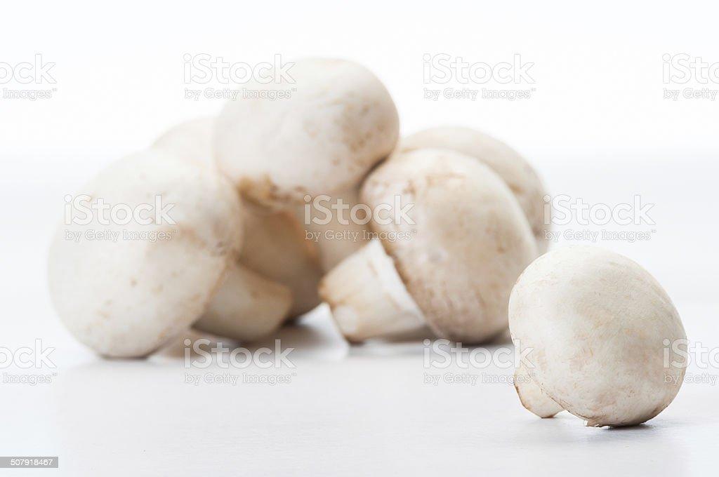Closeup of one mushroom stock photo