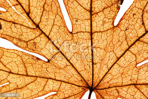 Macro of a dried-up old leaf.You can more images like this in my