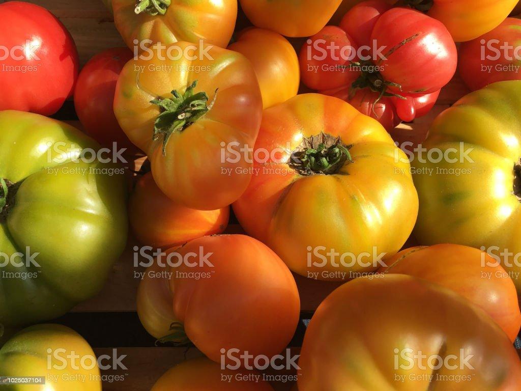 Closeup Of Organic Heirloom Tomatoes Varying Sizes Irregular