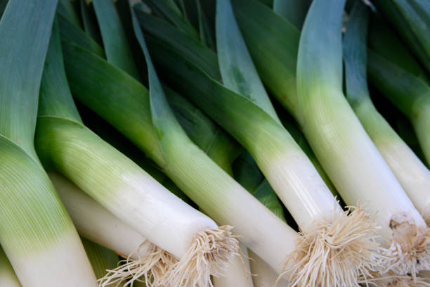 Close-up of Organic Leeks at Outdoor Farmer's Market Close-up of organic leeks at outdoor farmer's market. leek stock pictures, royalty-free photos & images