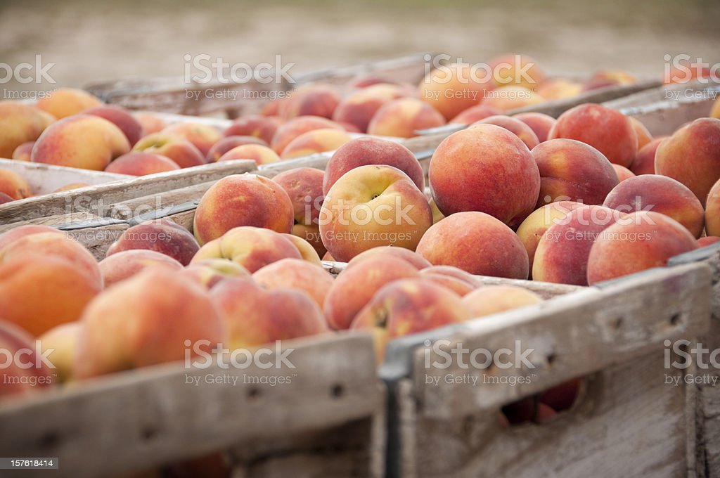 Close-Up of Peach Crates stock photo