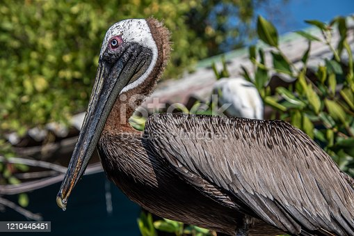 Close-up of pelican standing on pole on a blurred background