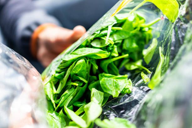 Closeup of person hands holding fresh raw, plastic packaged bag of green spinach, vibrant color, healthy salad stock photo
