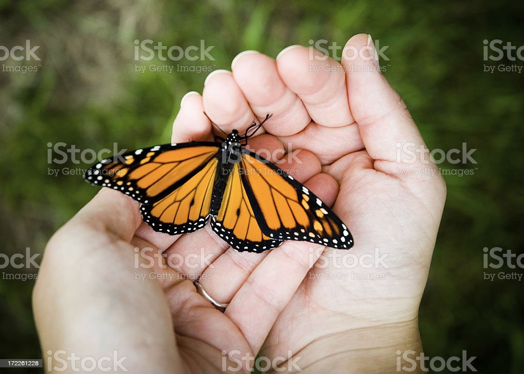 Close-up of Person Holding Butterfly In Hand stock photo