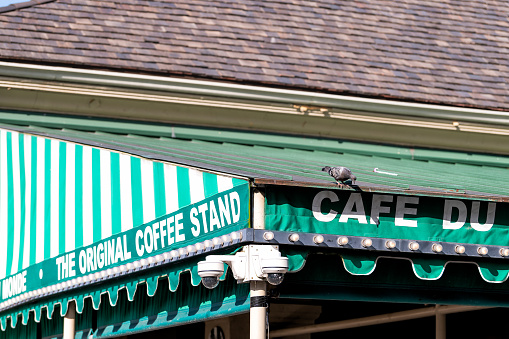 New Orleans, USA - April 23, 2019: Closeup of pigeon bird by Cafe Du Monde sign, famous restaurant serving beignet donuts and chicory coffee