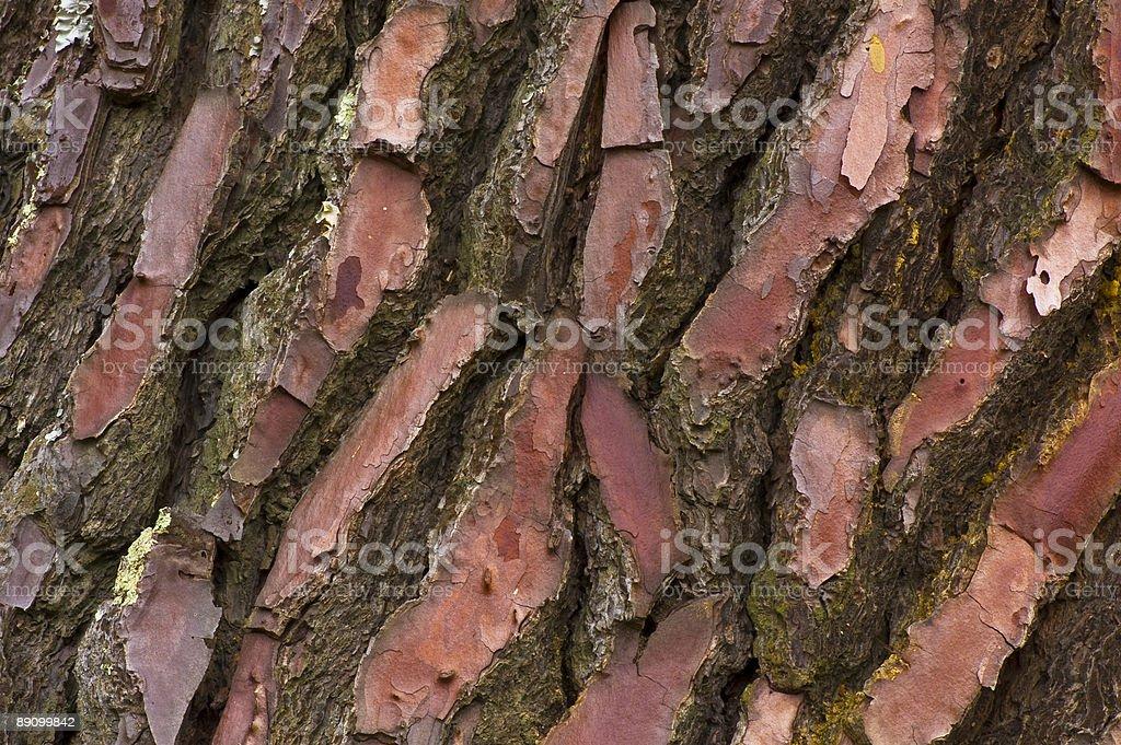 Close-up of сосновая кора Стоковые фото Стоковая фотография