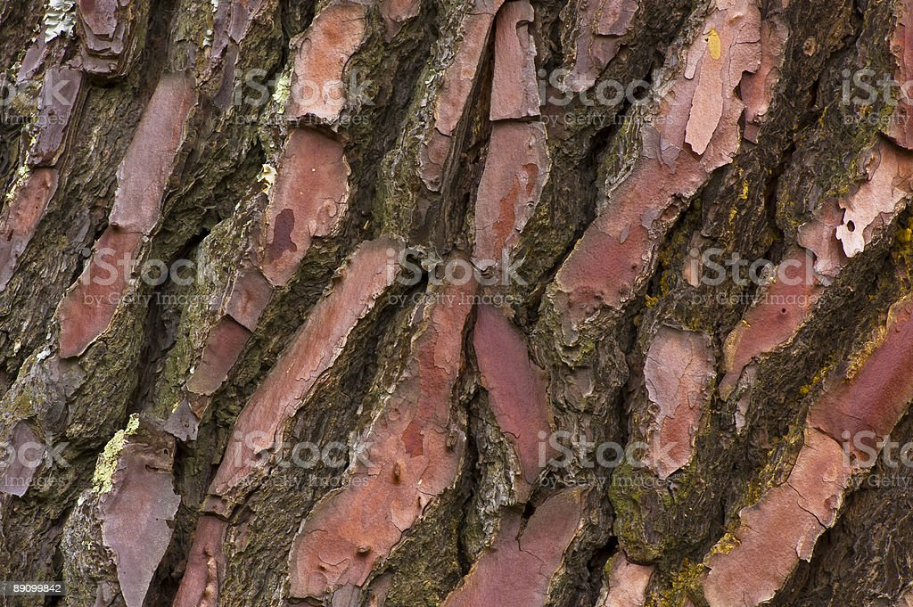 Close-up of Pine Bark royalty-free stock photo
