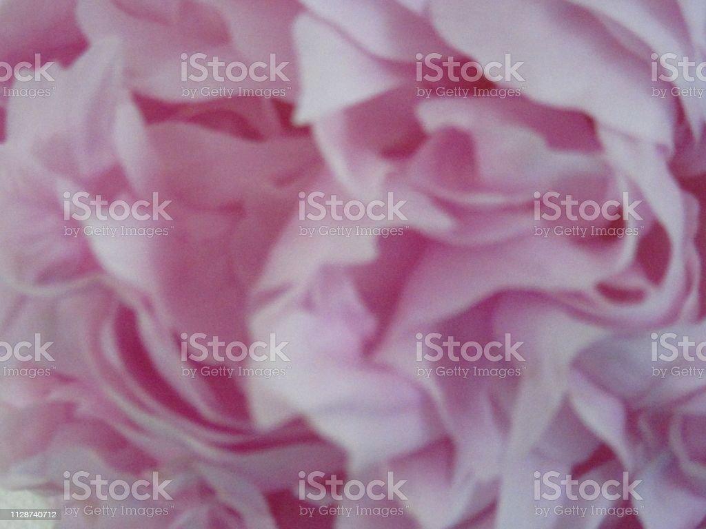 Closeup of pink peony petals stock photo