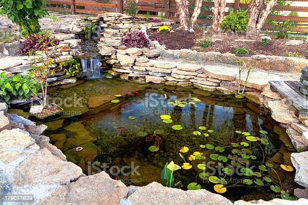 Photo of Close-up of pond with green leaves inside