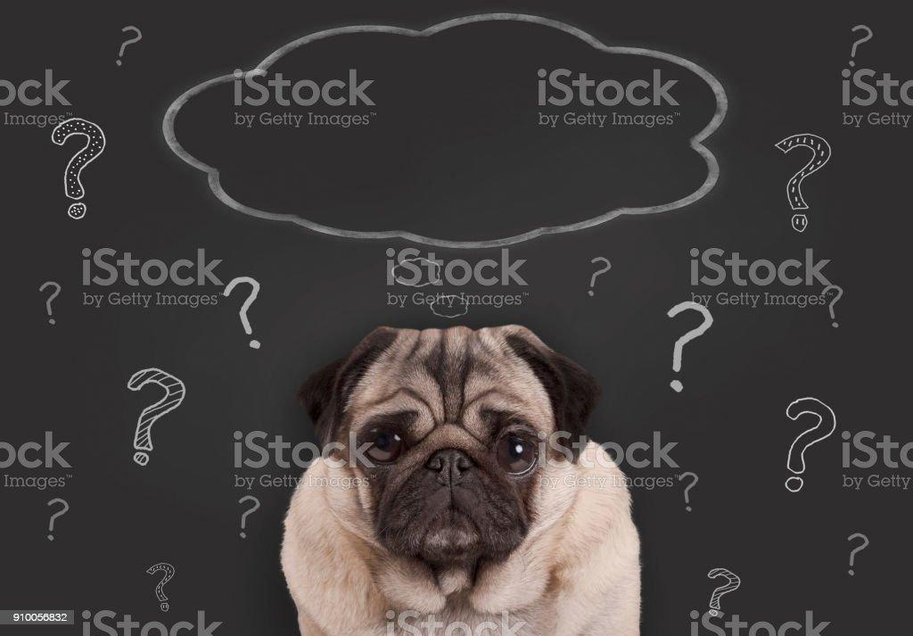 Close-up van pug puppy hondje zit schoolbord teken met de hand getekend krijt vraagtekens en lege gedachte zeepbel foto