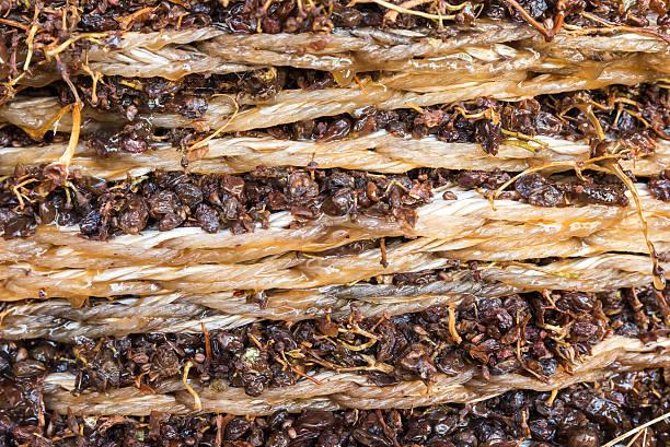 nahaufnahme von rosinen in eine drücken - weinflecken entfernen stock-fotos und bilder
