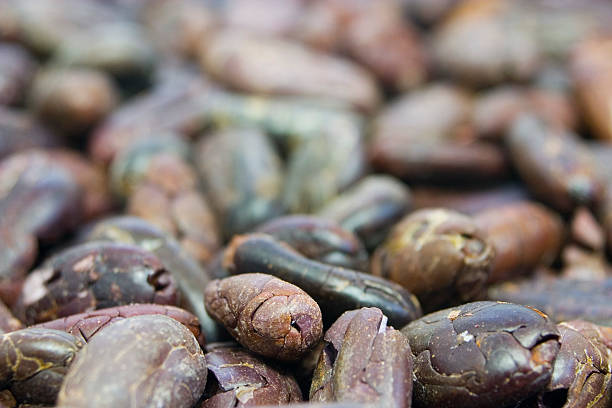 Close-up of Raw Cocoa Beans: Front Focus stock photo