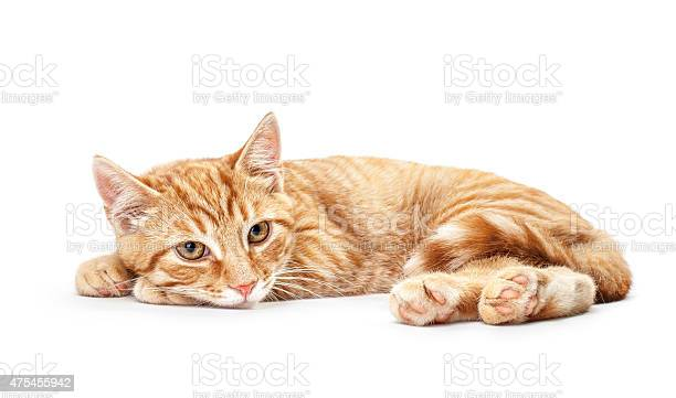 Closeup of red kitten isolated on a white background picture id475455942?b=1&k=6&m=475455942&s=612x612&h=tnultzs5tdauwfamq0srxjhpllhwumnhsuwksxyyup4=