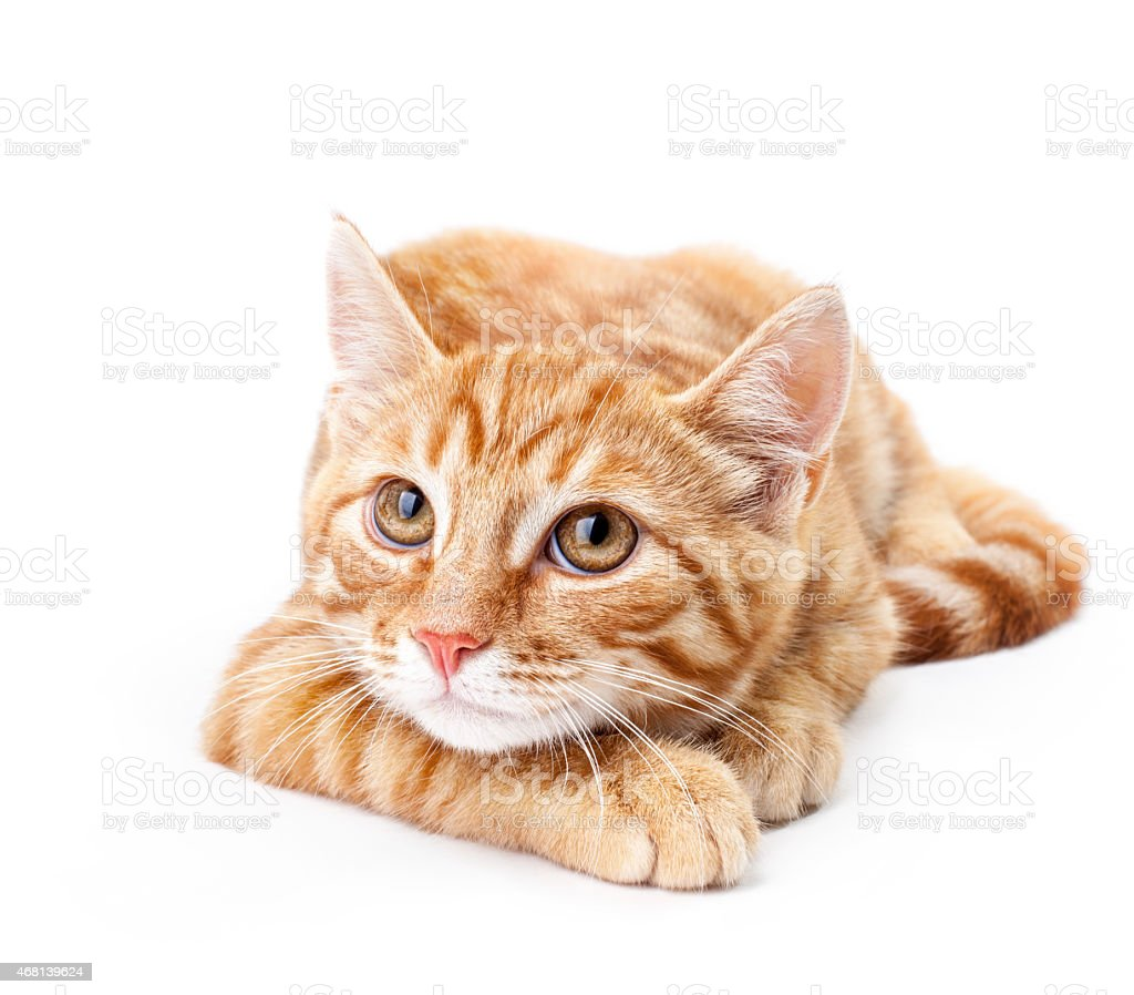 Close-up of red kitten on a white background