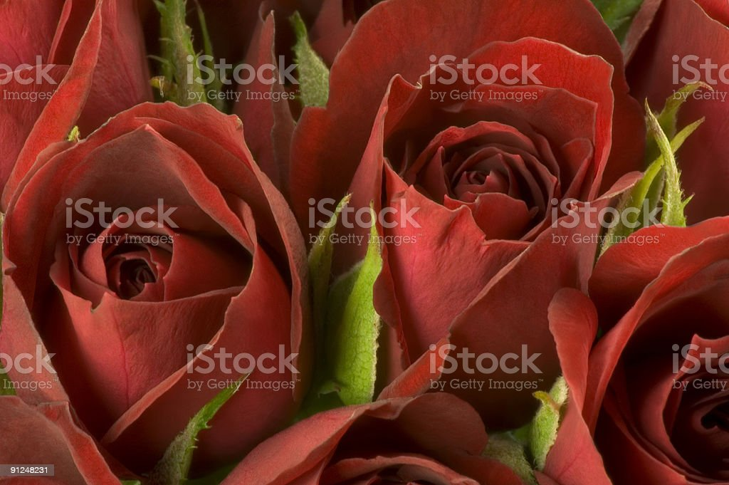 Close-up of Red Roses royalty-free stock photo