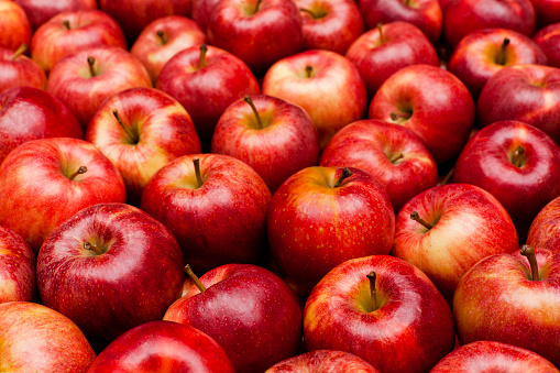 Royal Gala apples in a pile.  All of the apples are red with a slight yellow hue to them.  Several apples sit at an angle or on their side, while others sit perfectly straight.  There almost forty apples in view.