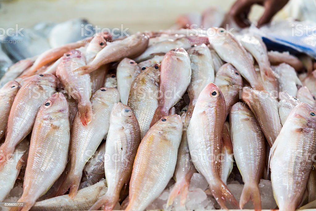 Close-up of Red Snappers at Dubai Fish Market stock photo