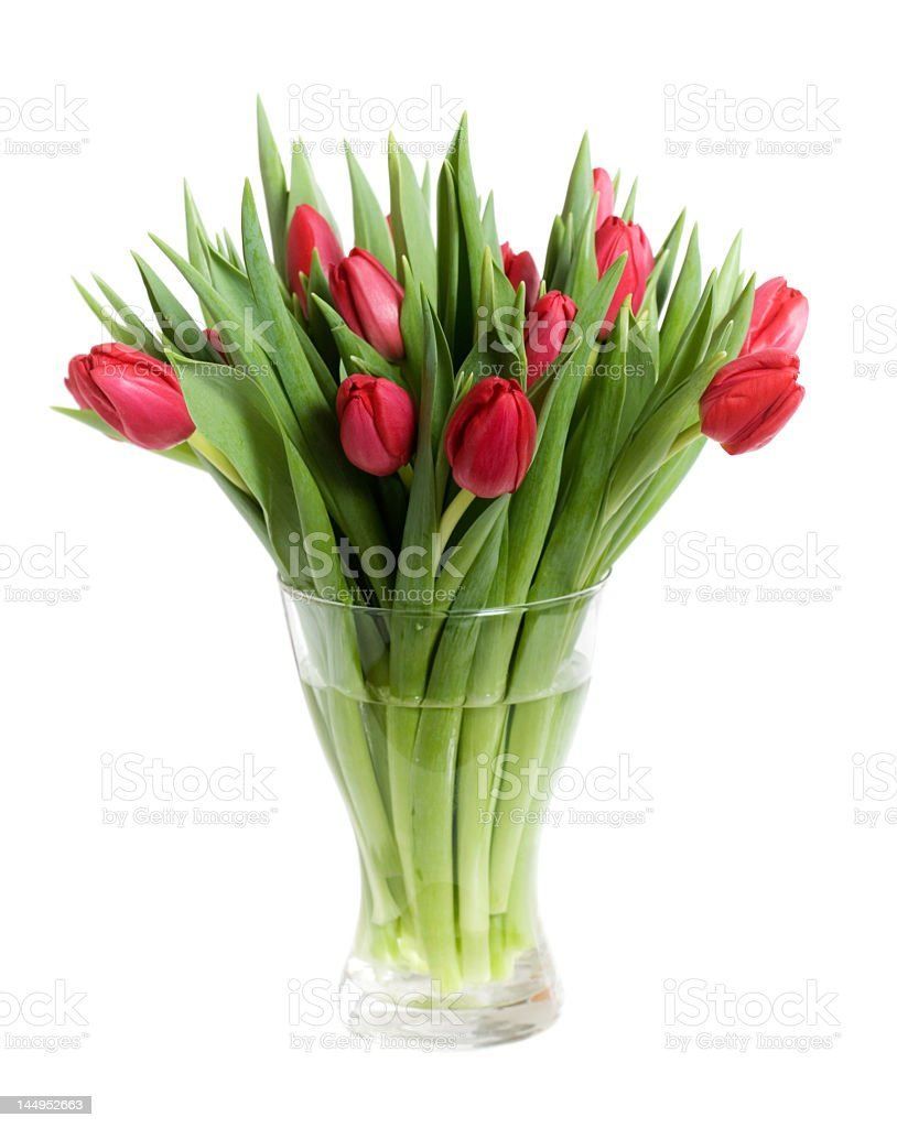 Close-up of red tulips in a transparent glass vase stock photo