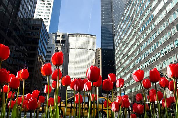 Rote Tulpen auf Park Avenue, New York City – Foto