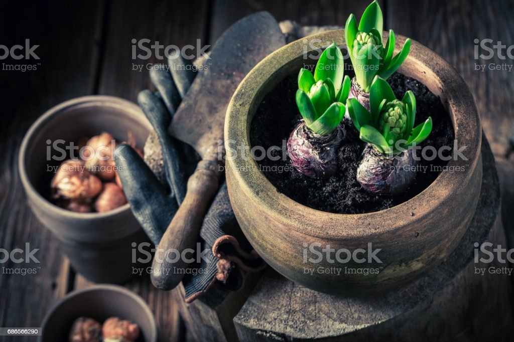 Closeup of repotting green spring flowers on wooden stump royalty free stockfoto