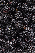 Closeup of ripe blackberry. Food dewberry background. Market berries