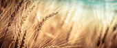 Close-up Of Ripe Golden Wheat With Vintage Effect, Clouds And Blue Sky - Harvest Time Concept