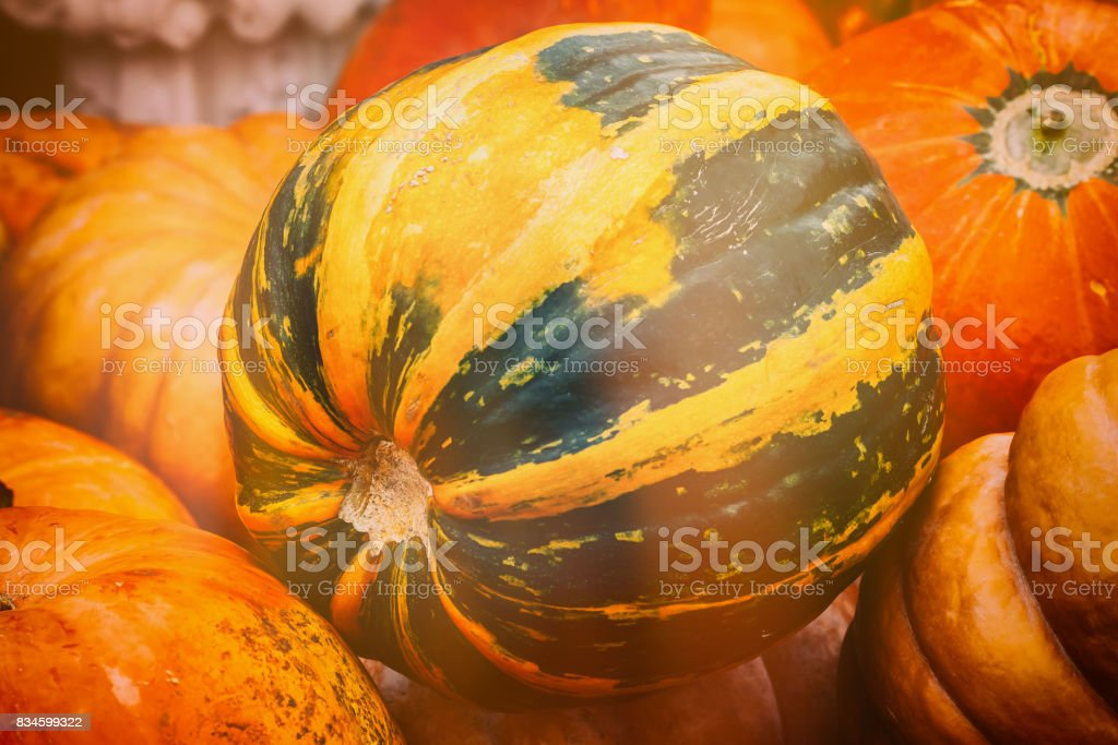 Close Up Of Rire Green Pumpkin Vintage Colours Rustic Fall Background Royalty