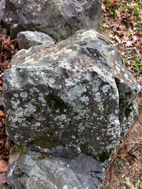 IMG_1300 Closeup of rock with lichen in wooded area stock photo