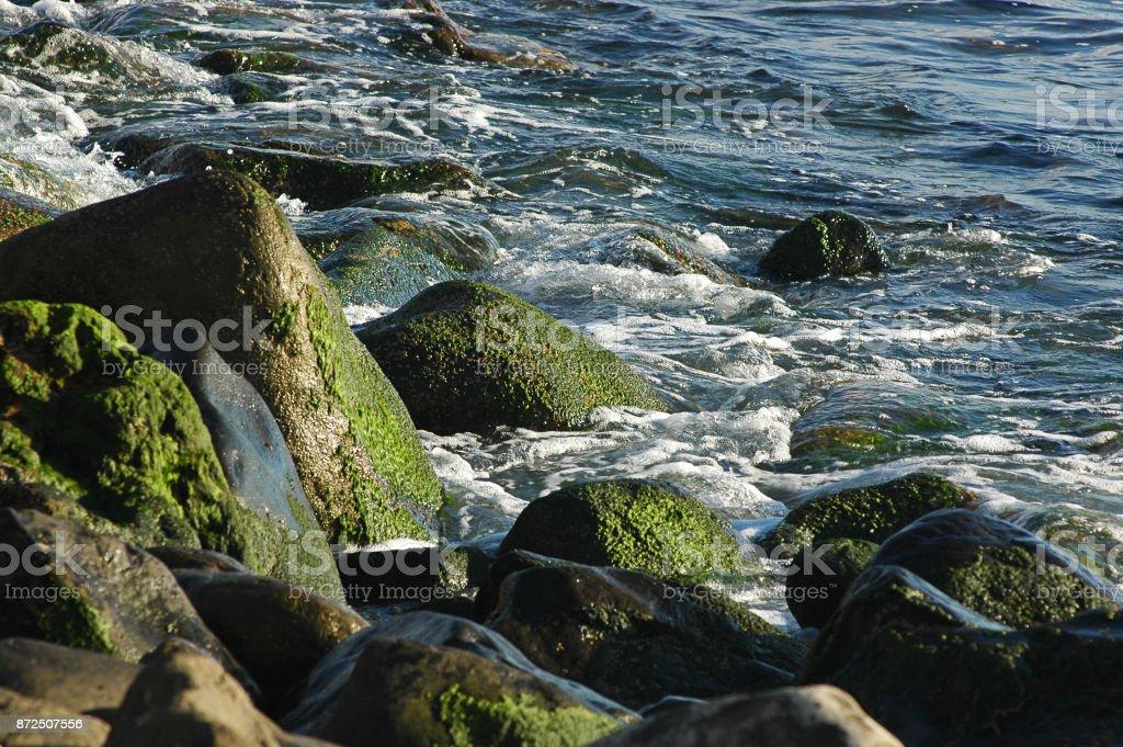 Primer plano de rocas con musgo verde, bajo la luz solar por la tarde en Tenerife, Islas Canarias, España - foto de stock