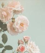 istock Closeup of rose , spring flower, vintage floral pattern, macro 1024953174
