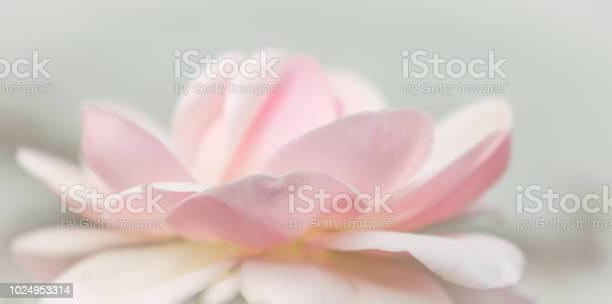 Closeup of rose spring flower vintage floral pattern macro picture id1024953314?b=1&k=6&m=1024953314&s=612x612&h=zftratynlkjxynyhqy lbnk3d4mjkkykxetbkpgou6y=