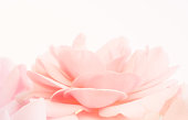 istock Closeup of rose , spring flower, vintage floral pattern, macro 1024954824