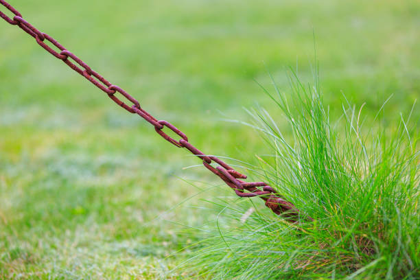 Close-up of rusty chain on green grass background stock photo