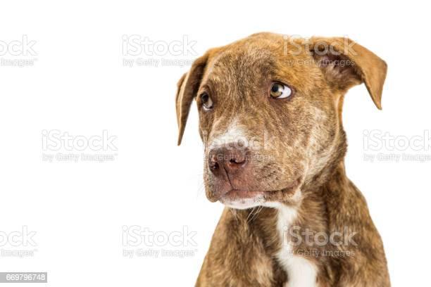 Closeup of sad guilty puppy picture id669796748?b=1&k=6&m=669796748&s=612x612&h=urnxjhbolpubjooudkys7rbyu3hee5rajyowdqkcgri=