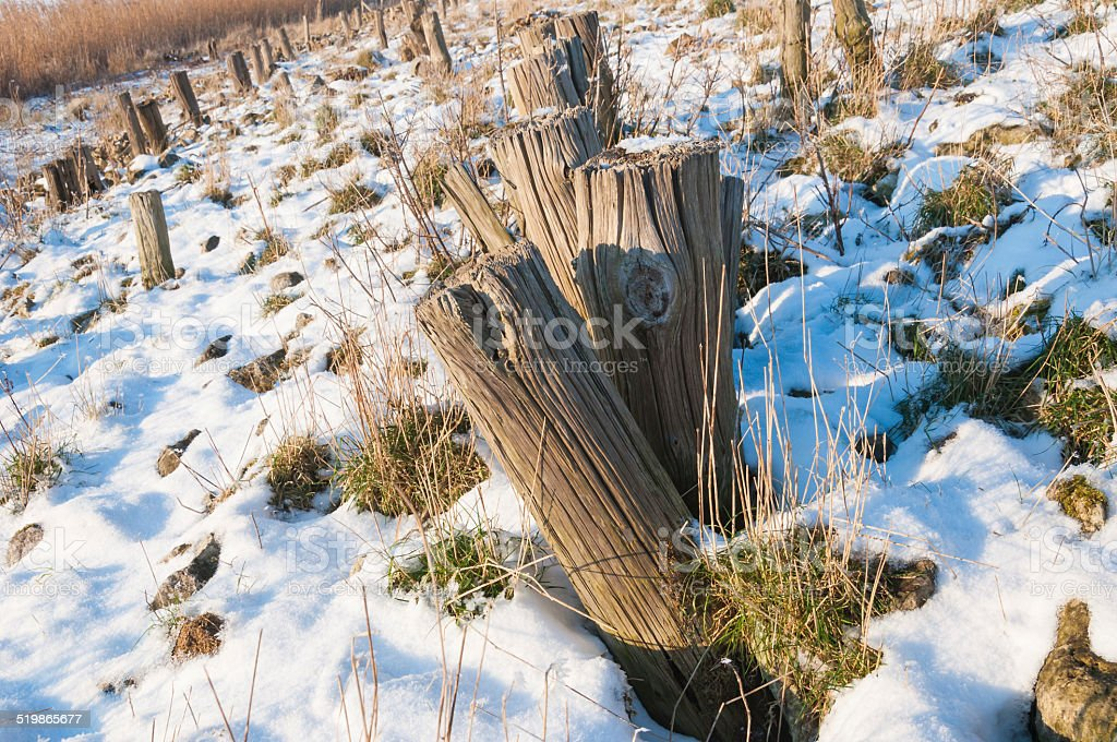 Closeup of sawed tree trunks on a snowy slope stock photo