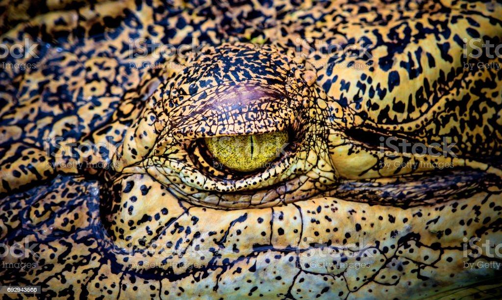 close-up of scary crocodile eye stock photo