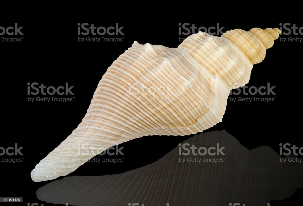Close-up of sea shell isolated on black royalty-free stock photo