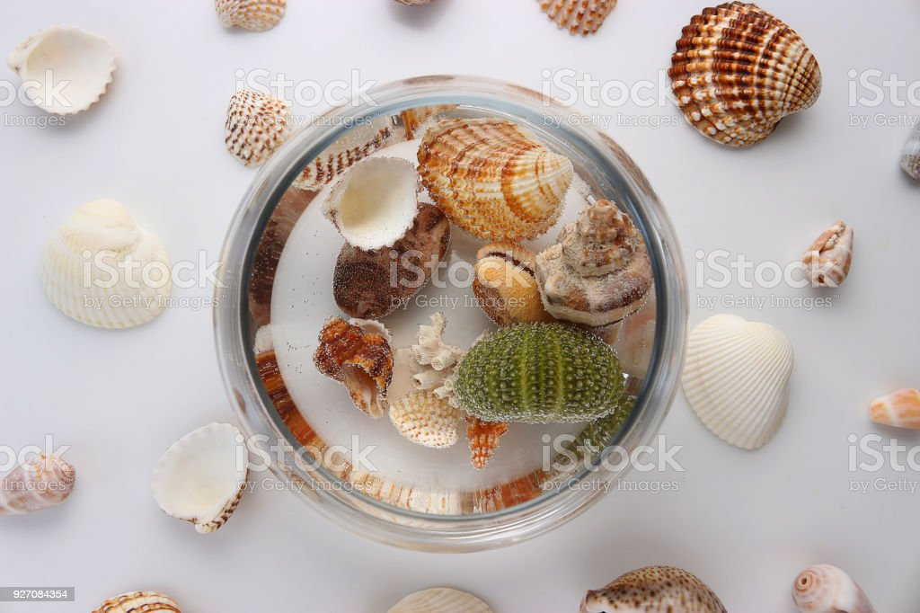 Closeup Of Seashells In A Glass Vase With Water White Background